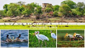 Wild Life and Ecotourism of Telangana