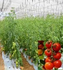 Horticulture of Telangana