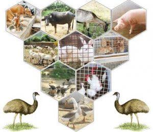 Animal Husbandry of Telangana